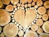 Paraziti, nepozvaní hostia v dreve - ako si s nimi poradiť?